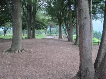 赤城高原SAの木の道.JPG