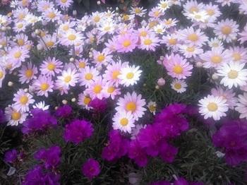 お花6^^.JPG