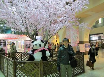 パンダと桜とまーくん.JPG