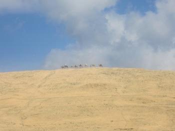 ラクダの列.JPG