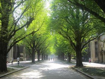 東大キャンパスの通り.JPG